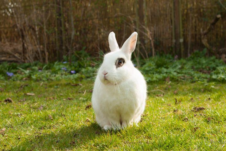 Kaninsnak -En hel hyggeserie - Kaninsnak -