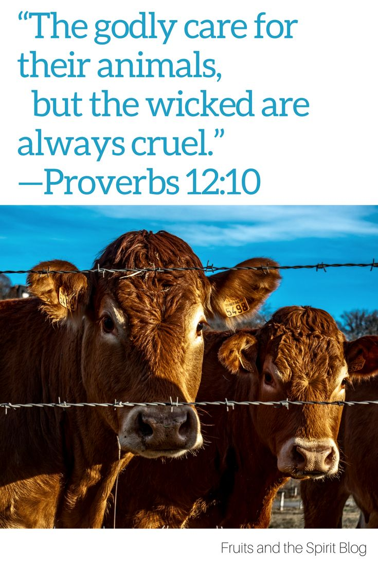 The Godly Care: Biblical Veganism in Proverbs  | Christian Vegetarianism | Proverbs 12:10