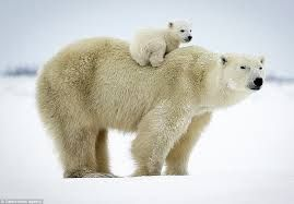 Image result for polar bear and girl picture book