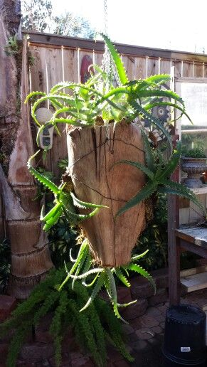 Hanging planter made from palm fronds