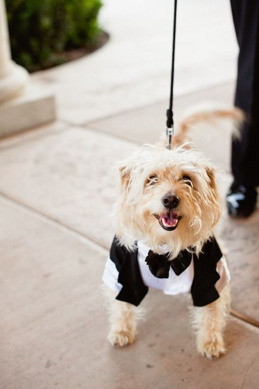 Your Dog Ring Bearer They Say That A Is Man S Best Friend You Are Probably Torn When Planning Wedding On How To Incorporate