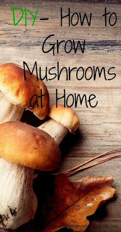 DIY - How to Grow Mushrooms at Home: grow outdoors using the log and stump method or grow indoors using coffee grounds
