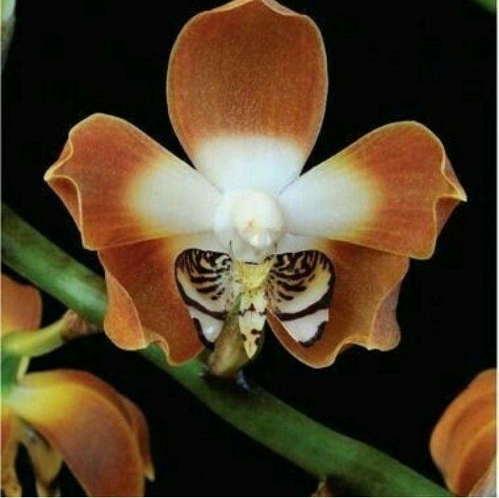 Beautiful Orchideen Beste Blumen Coole Pflanzen