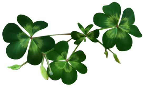 Irish Shamrocks PNG Clipart