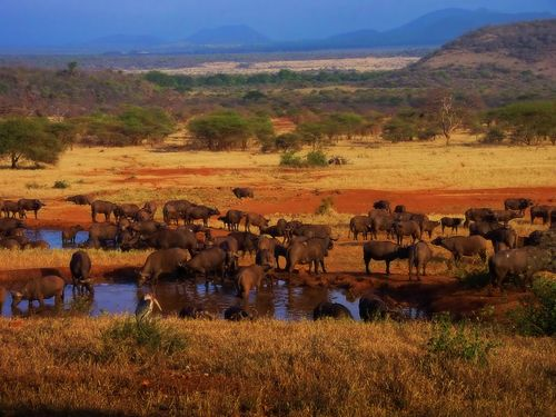 Serengeti National Park, Tanzania. I've wanted to go on a safari for as long as I can remember.