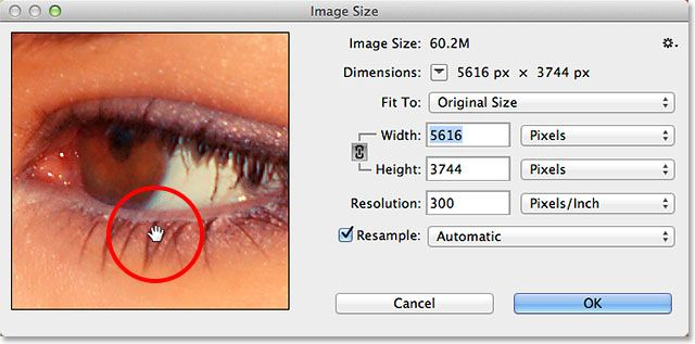 The Dragging the image around inside the Image Size preview window in Photoshop CC. Image © 2013 Photoshop Essentials