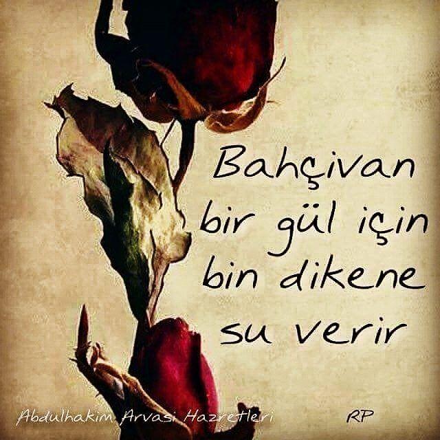 Bahçıvan, bir gül için bin dikene su verir.   - Abdülhakim Arvasi Hazretleri  #sözler #anlamlısözler #güzelsözler #manalısözler #özlüsözler #alıntı #alıntılar #alıntıdır #alıntısözler