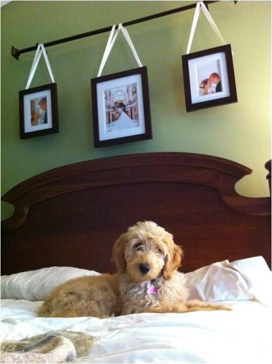 Pictures hung from a curtain rod over a bed