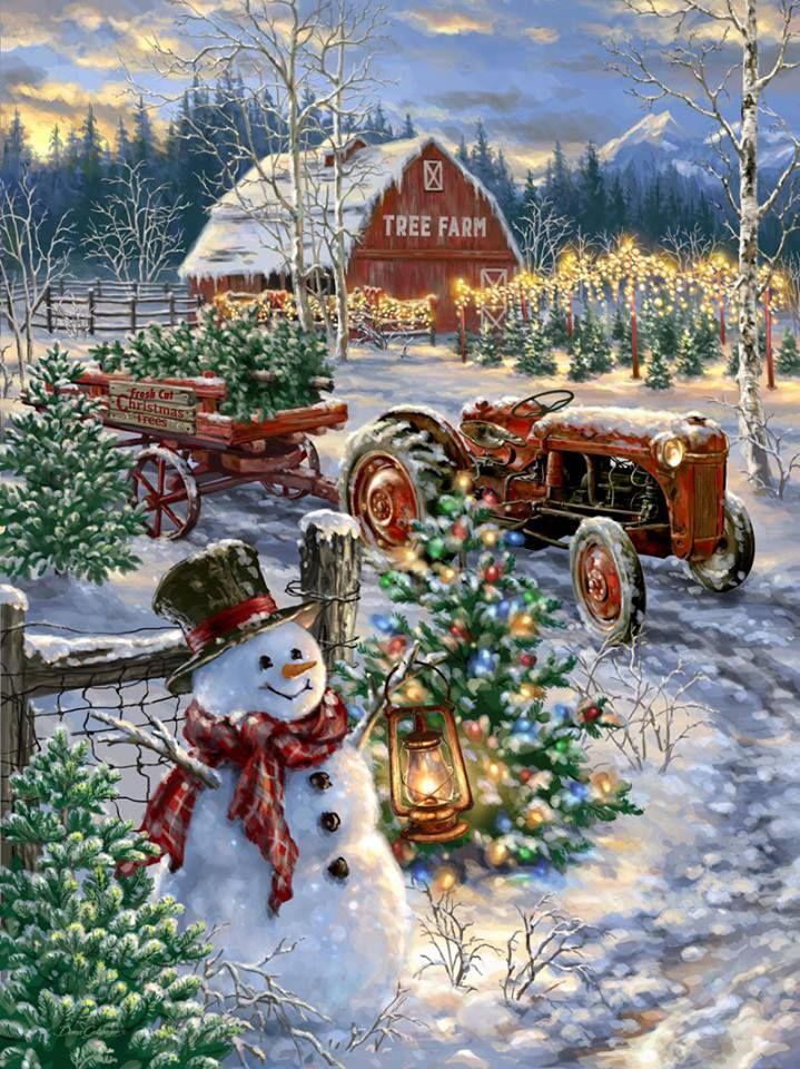 Christmas time at a tree farm The