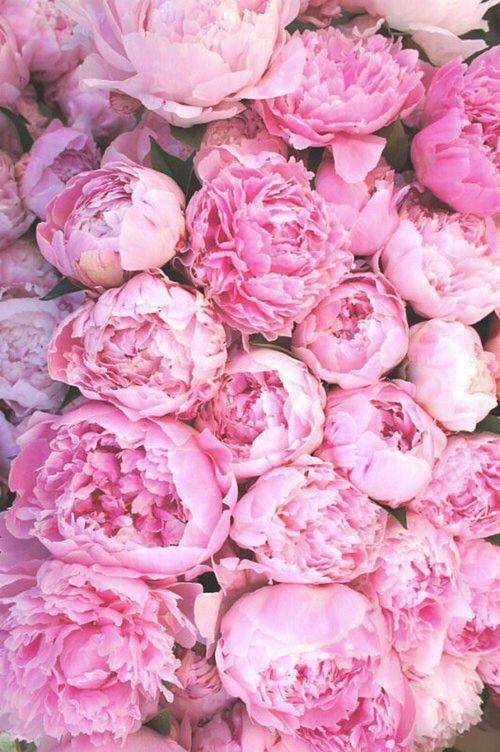 Imagine flowers, pink, and peonies