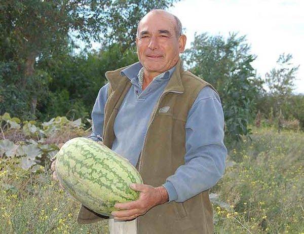 Madryn: productor cosecha hortalizas y verduras regados con agua tratada