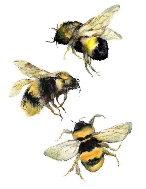 Hummelaquarelldruck-Bienenaquarell-Bienenmalerei-Naturgrafik-Honigbienenliebhabergeschenk-Bienendruck