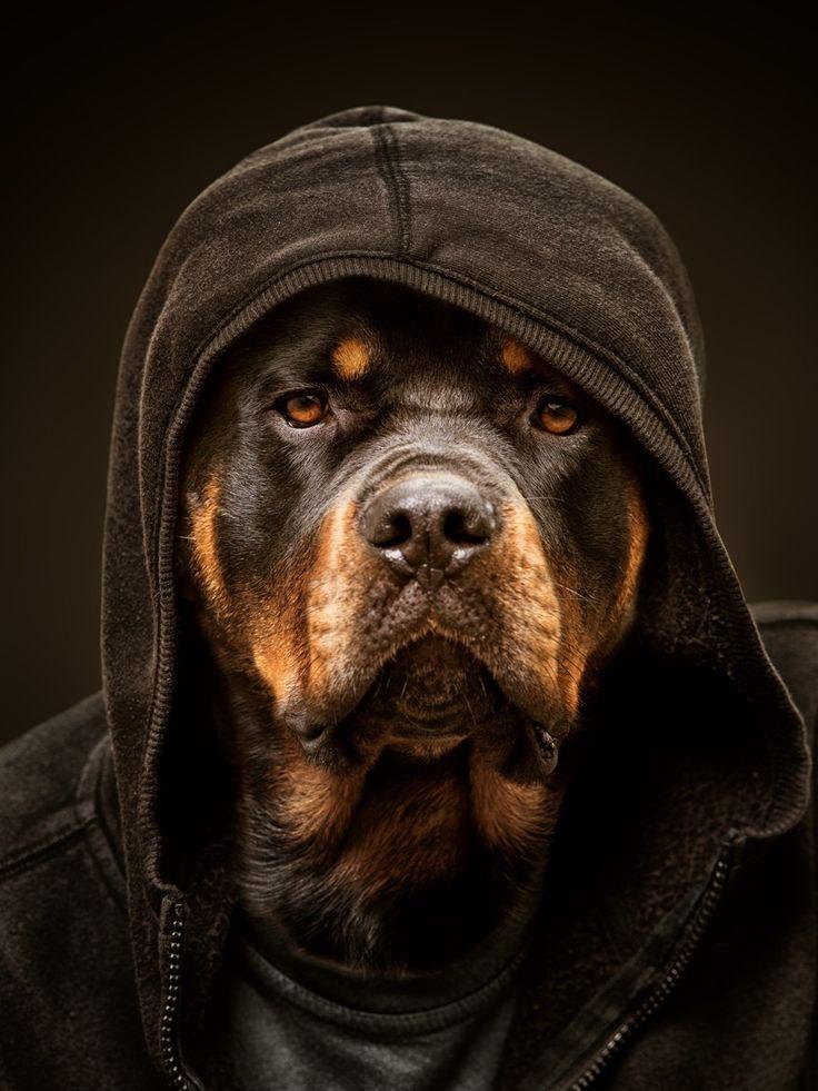 Thug Dog Names