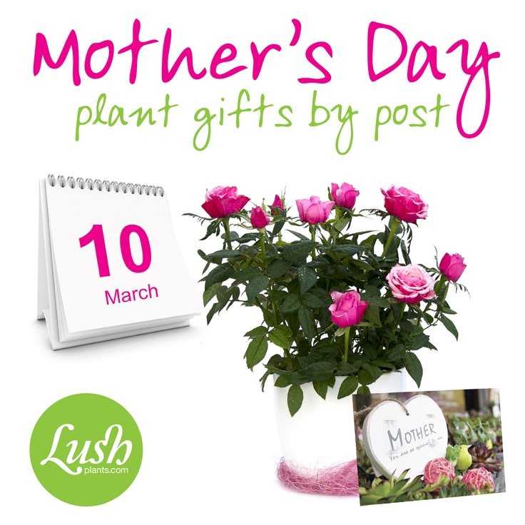 The Mothers day flowers UK can be accessed from the online webstore which will also give you the guide you need to take care of the plants. You can either direct you mother to the online guide for taking care of the plant, or you can learn the special way to take care of the plant bought for your mother.