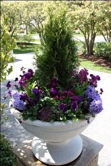 """Use a small evergreen like a cedar or spruce as the centrepiece or """"thriller"""" in your urn for a unique look!"""