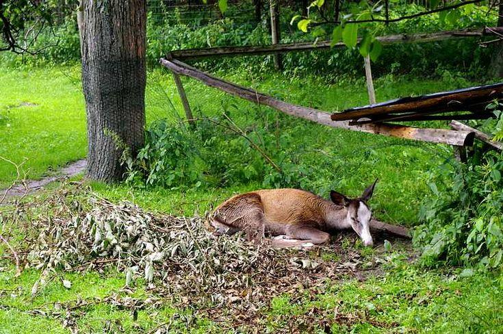 Polskie parki rozrywki - Park Dzikich Zwierząt Kadzidłowo