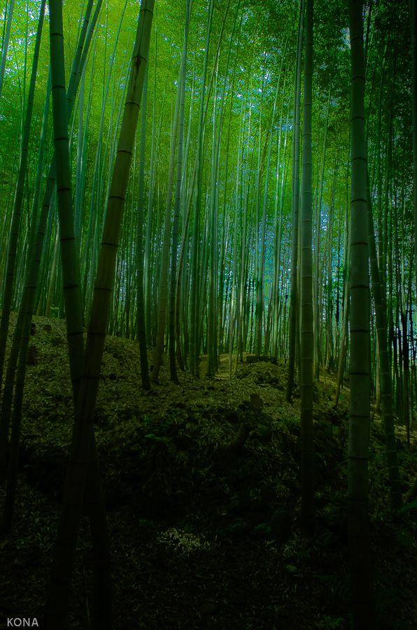 """""""斜光"""" 嵯峨野 ... Kyoto, Japan"""