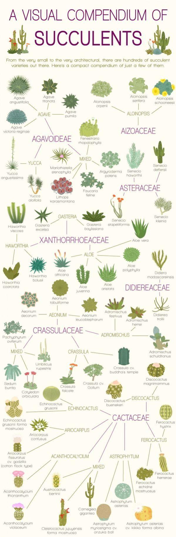 A visual compendium of succulents |