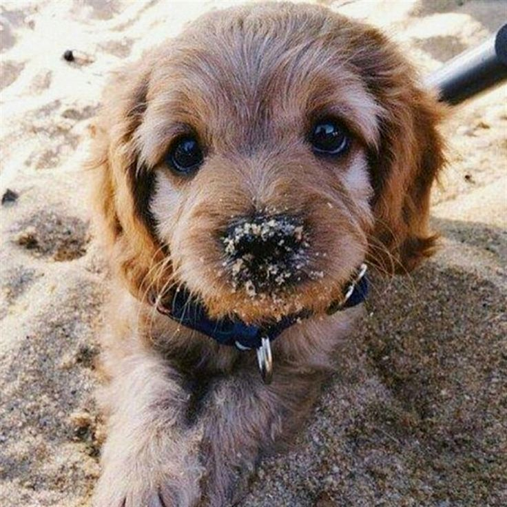 This Pin Was Discovered By Treegift Discover And Save Your Own Pins On Pinterest In 2020 Cute Animals Baby Dogs Cute Puppies
