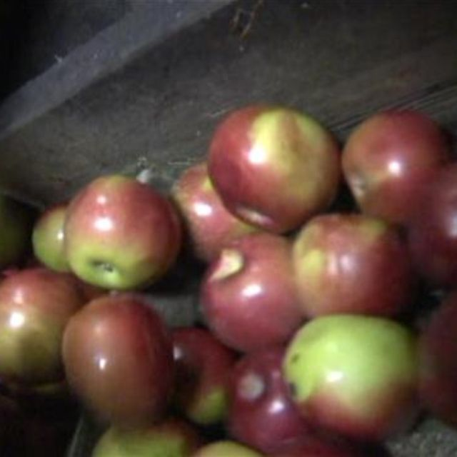 In Elliot,Maine ,visit King Tut's Cider Press has been making unpasteurized cider from local apples for sale.Make your own for $5.00 a gallon with your own apples see video from Bill Green's Maine.