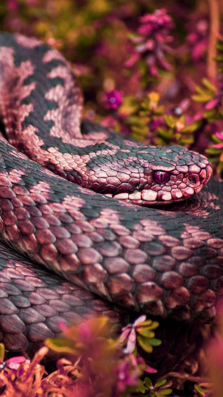 Pink Snake By Georgekev In 2020 Snake Wallpaper Pink Snake Snake
