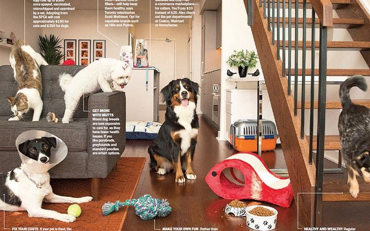 Moneysense Magazine featuring dogs from Hot Paws Talent