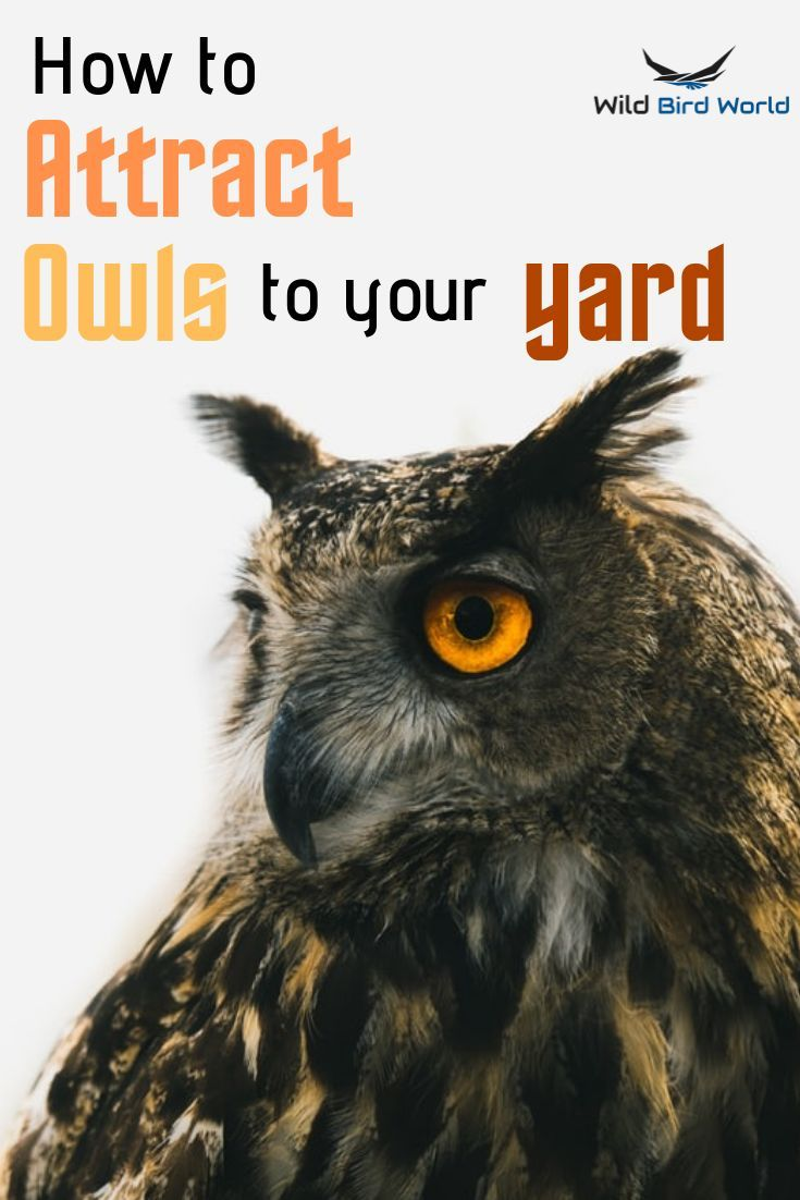 Follow This Guide On The Best Ways To Attract Owls To Your Garden Yard Home Tips On Attracting Owls Can Be Difficult To Owl Attract Wild Birds Wild Birds