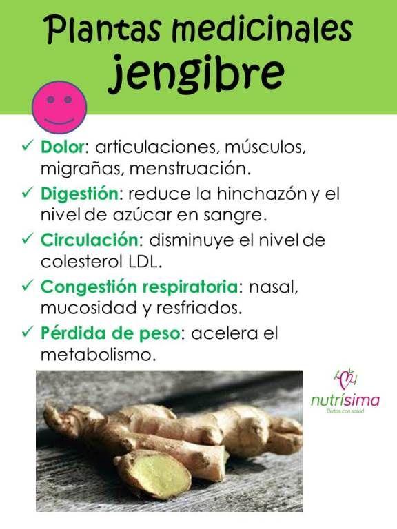 Propiedades medicinales de la raiz de jengibre