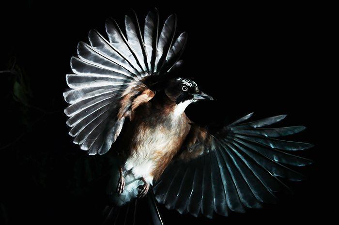 Le Grand Orchestre des animaux, jusqu'au 8 janvier 2017 à la Fondation Cartier pour l'art contemporain, 261, boulevard Raspail, 75014 Paris / © Manabu Miyazaki - Mathieu Simonet