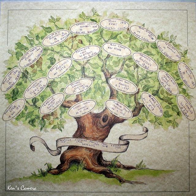 drawn family tree