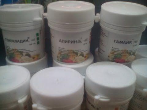 Биопрепараты Глиокладин, Алирин, Гамаир. Защита растений от болезней и вредителей - YouTube