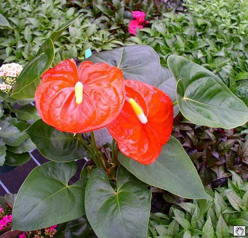 Beautiful Tropical Plants And How To Grow Them Every