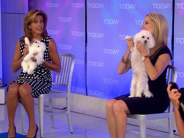Doga! Kathie Lee does yoga with Bambino #LOL #PuppyLove: Bichon Cotton Beauties, Bichon Frise, Bichon Babies, Bijon Frise S, Kathie Lee, Puppy, Bishon Carson, Beauties Cotton