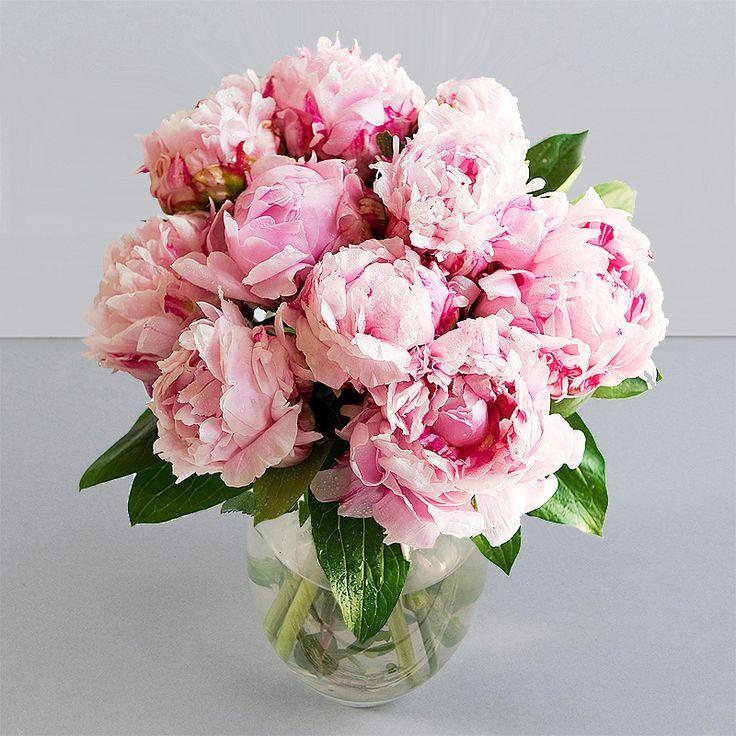 13 Best Flowers Images On Pinterest