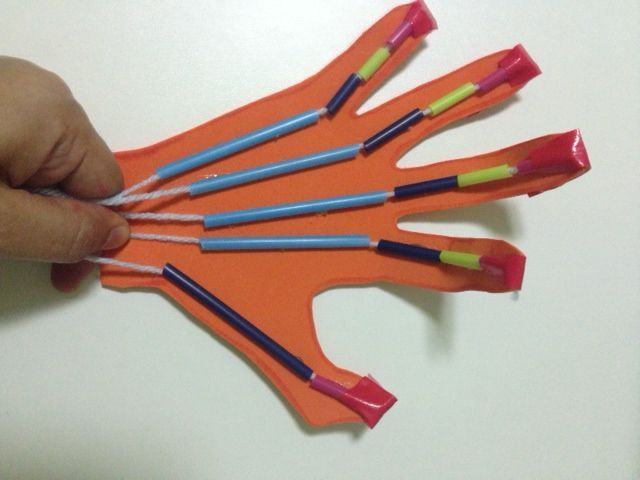 Make a robot hand while studying the Muscular System…                                                                                                                                                                                 More