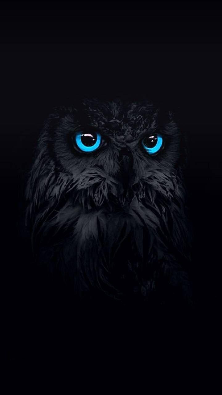 1440x2560 Pinfeather Fluffy Owl Cute And Adorable Wallpaper Cute Birds Owl Wallpaper Iphone Cute Owls Wallpaper