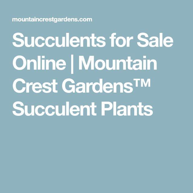Succulents for Sale Online   Mountain Crest Gardens™ Succulent Plants