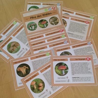 Ideenreise: Pilze des Waldes (Kleine Wissenskartei)