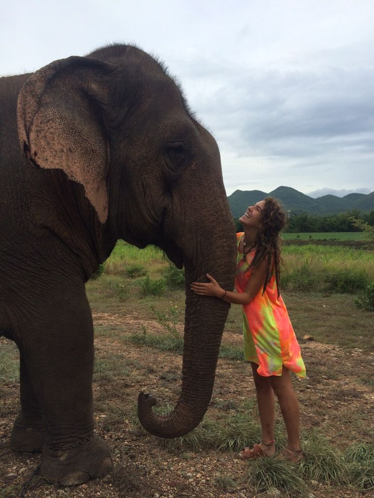 Elephant Trekking, In Thailand, To Find Out