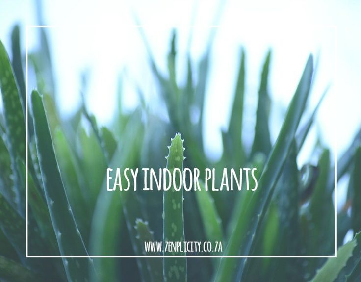 Zenplicity Blog: Easy to Care for Indoor Plants