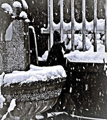 Una bella nevicata!   da civetta delle nevi