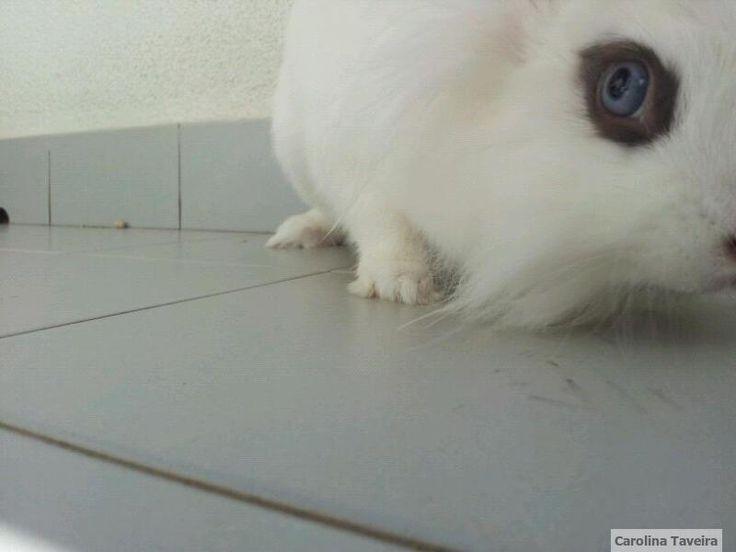 Noah.  #coelho #rabbit