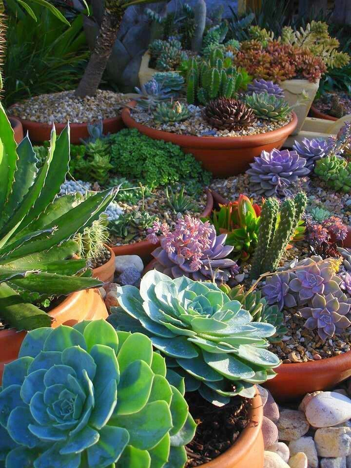 Succulent garden - such stunning colour