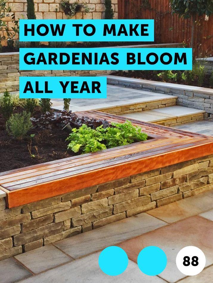 How To Make Gardenias Bloom All Year Plants San Pedro Cacti