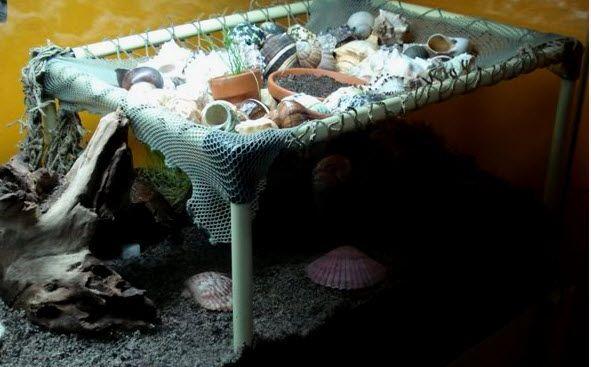 123 Best Images About Hermit Crab Diy On Pinterest Diy