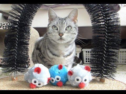 初めてのセルフグルーミングに迷った猫へ ~助けるつもりが裏目に出てしまい…  -Cat can't use Self-Groomer