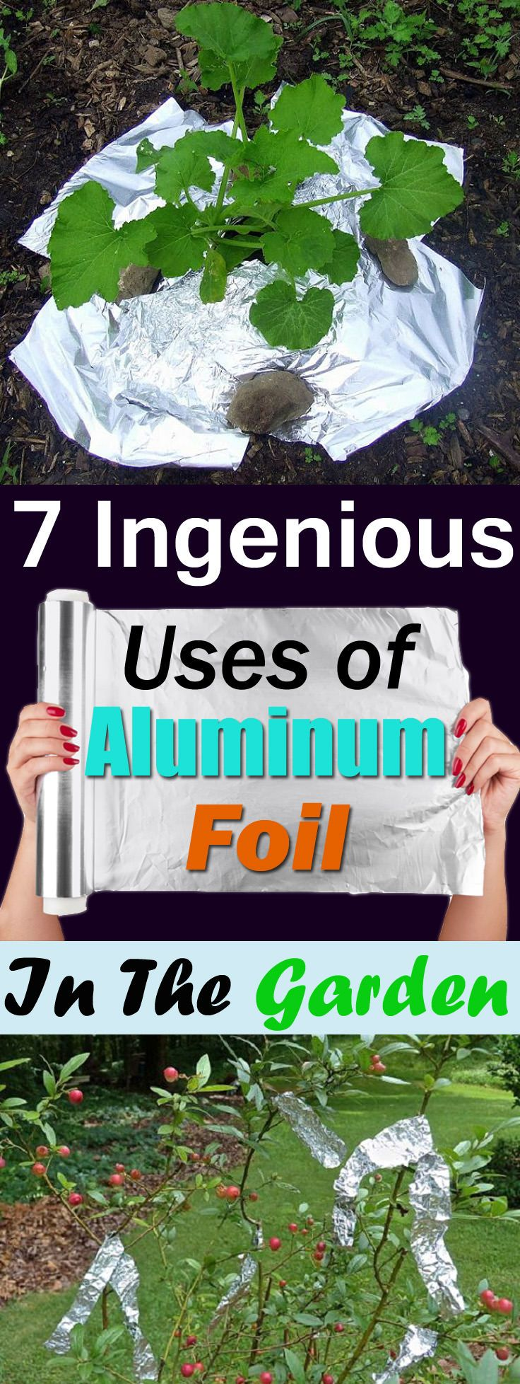 Aluminum foil has so many uses in the kitchen and home but do you know it is also useful in the garden? Check out the 7 best Aluminum Foil Uses in the garden!