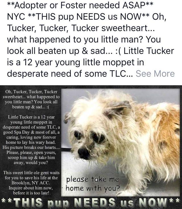 Tucker Needs Help Nyc Dogs Dog Safe Nyc