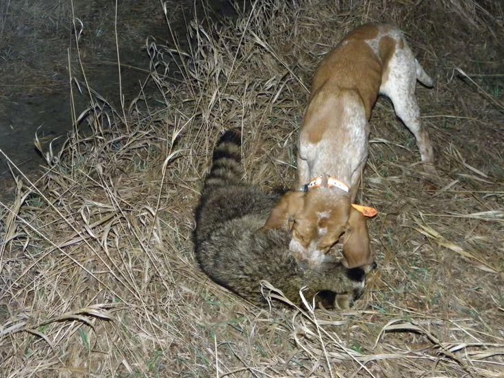Bear Dog Kennels