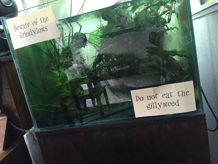 Harry potter themed fish tank google search fish for Harry potter fish tank